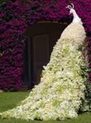 美麗優雅的孔雀,以淡雅花草組成,比門還要高。翻攝Architecture & Design臉書