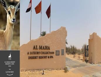 「Al Maha 沙漠綠洲渡村」的圖片搜尋結果